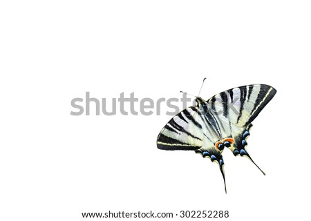 Swallowtail butterfly isolated on white background - stock photo