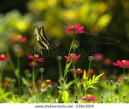 Swallowtail butterfly on flowers Ometepe Island Nicaragua - stock photo