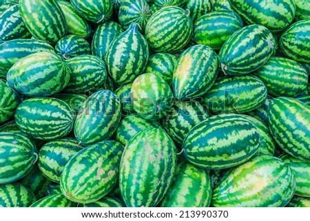 Sweet green watermelons - stock photo