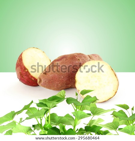 sweet  potato with plant on green background - stock photo