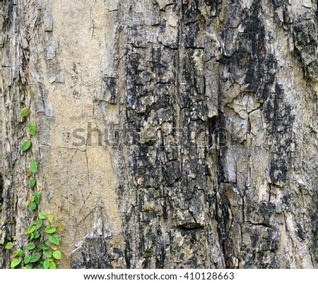 tallow  trunk  with vines  background