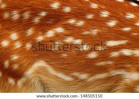 texture of real axis sika deer fur - stock photo