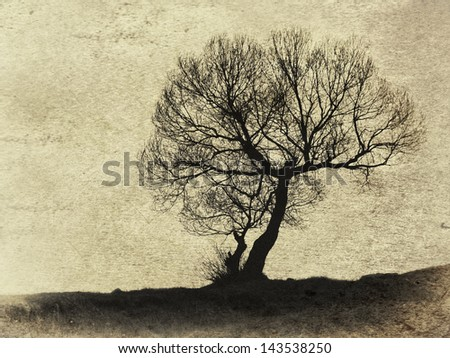 textured vintage old tree silhouette