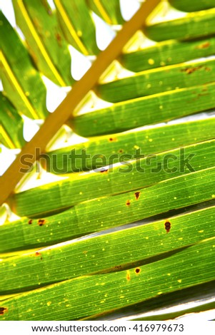 thailand   abstract  in the light  leaf and his veins background  of a  green  white