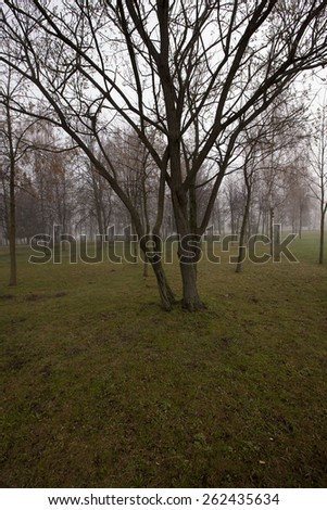 the bare trunks of trees in a city park in autumn. - stock photo