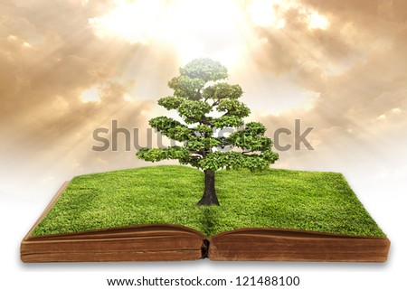 The big tree growing from the open book. - stock photo
