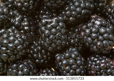 The blackberry is an edible fruit produced by many species in the Rubus genus in the Rosaceae family.