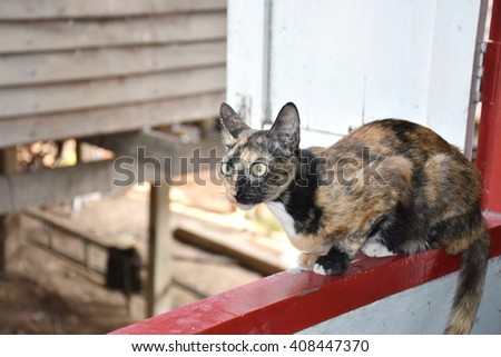 The cat sat on the window sill