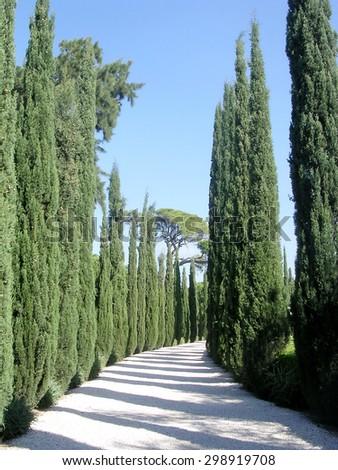 The cypress in Bahai garden near Akko, Israel                 - stock photo