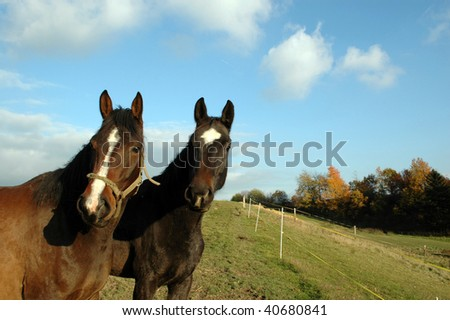 The heads of two horses. - stock photo