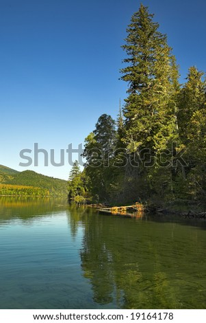 The lake surrounded by a dense wood - stock photo