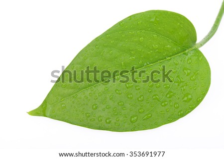 The leaf on a white background