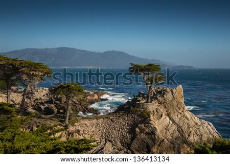 The Lone Cypress Tree - stock photo