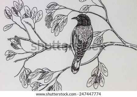 The original drawing of birds on white paper, Black-headed Bulbul