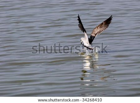 The rapid takeoff the white gulls from the water. - stock photo