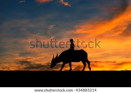The rider with Buffalo evening light. Thailand is a way of life.