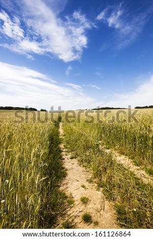 the road from the cars, being in a field on which wheat grows - stock photo