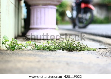 The sidewalk and The weeds on The fissure.in-Thailand.