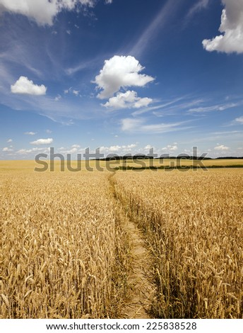the small trodden footpath in an agricultural field - stock photo