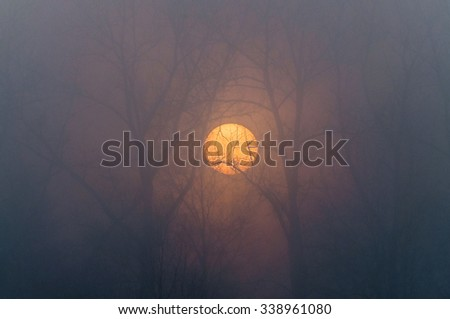 The sun rises behind bare trees in fog, autumn - stock photo