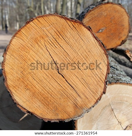 the surface of natural wood, saw cut on the tree