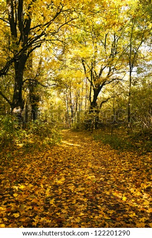 the walking road for people to an autumn season. the road through park - stock photo