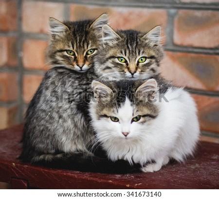 Three little fluffy kitten on bench - stock photo