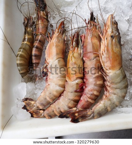 â?¢	Tiger prawn, Penaeus monodon, Giant Tiger Prawn. - stock photo