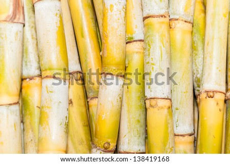 Top view of bundles of freshly harvested sugar cane stalks for background use - stock photo