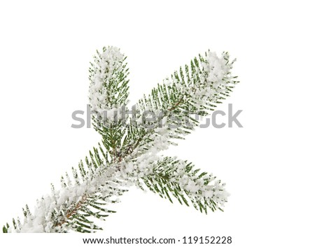 tree branch covered with snow on white background - stock photo