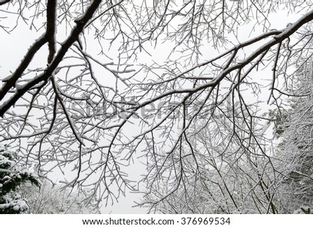tree branch in winter snow