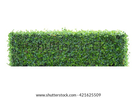 Tree Bush Isolate For Retouch The Fence Around The House And Garden.