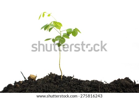 tree growing seedling in soil isolated on white background