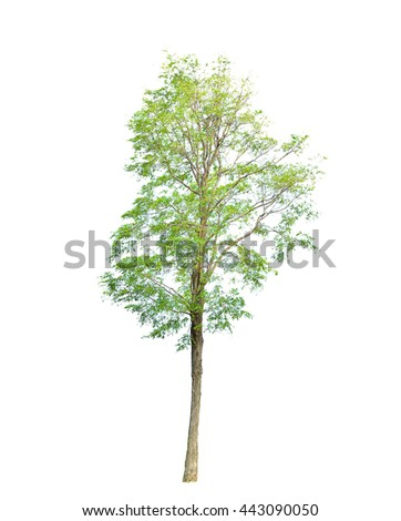 Trees green isolated on white background