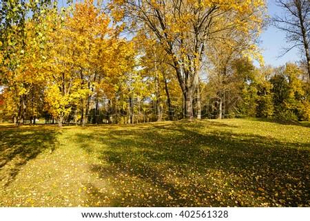 trees growing in the autumn season. yellowed foliage - stock photo
