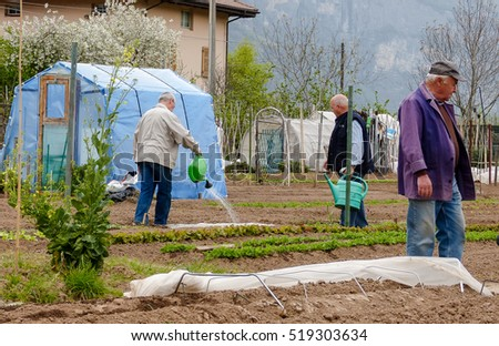 City Vegetable Garden Stock Images, Royalty-Free Images & Vectors ...