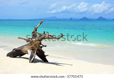 tropical beach: tree trunk left on the sand.