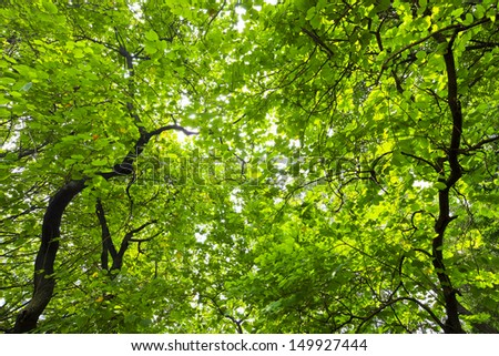 trunk of big green tree in park on a sunny day - stock photo
