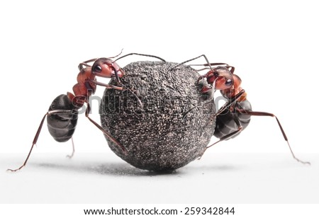 two ants rolling heavy stone     - stock photo