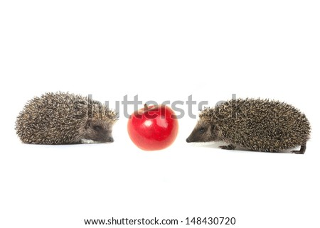 two hedgehog  on a white background - stock photo