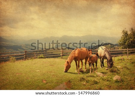Two horses and foal  in meadow.  Photo in retro style. Paper texture. - stock photo