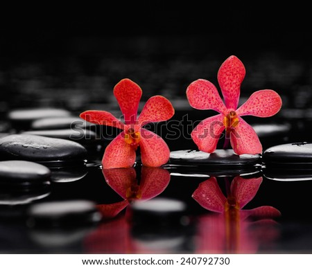 two red orchid with therapy stones - stock photo