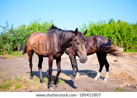 Two young horses on background of rural landscape grazing