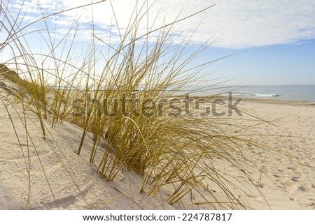 Typical plants on the Coast of the Baltic Sea, Mecklenburg-Vorpommern, Germany. Was seen in Markgrafenheide.