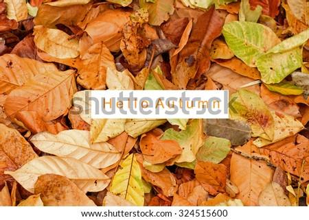 """typography quotes """"Hello Autumn"""" - stock photo"""