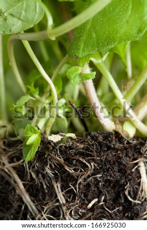 underground root visible - stock photo
