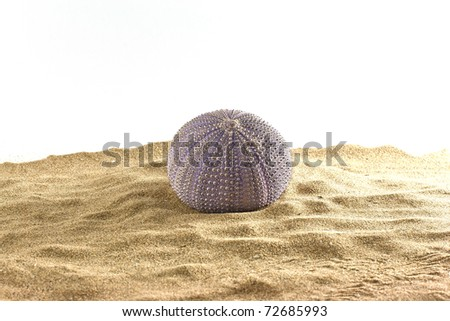 ,urchin on the sand, - stock photo
