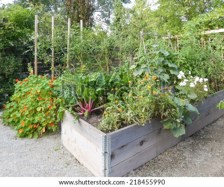 vegetables and nasturtiums in raised beds