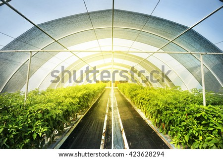 Vegetables in greenhouses - stock photo