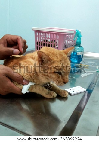 veterinarian check up for sickness cat - stock photo